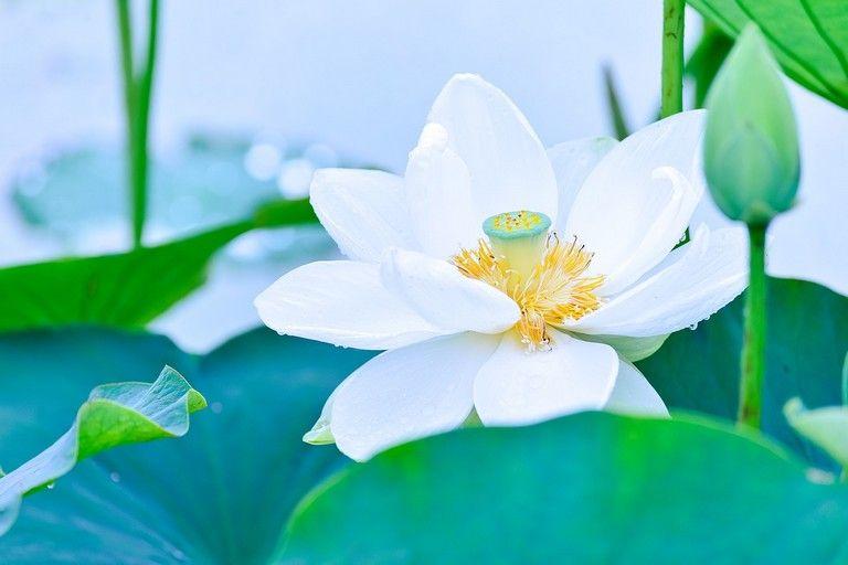 Spiritualité et médiumnité